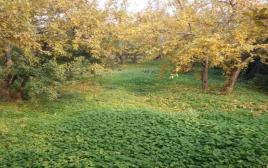 石榴种植、施肥、防虫、浇水、管理技术文章合集